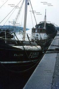 M.T. Ellena FD333