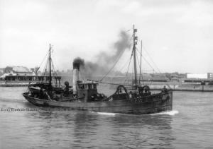 S.T. Acorn LT31