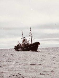 S.T. Calydon H253